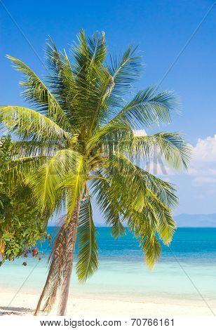 Idyllic Island Palm View