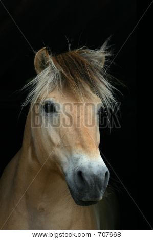 Beautiful Horse On Black