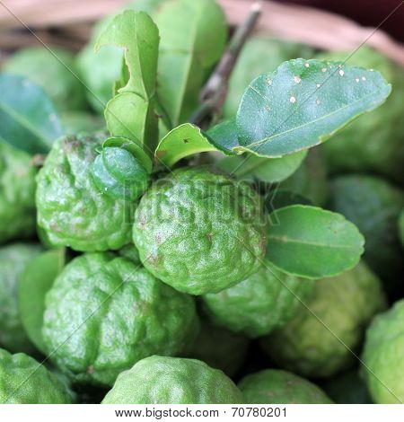 Kaffir Lime Or Leech Lime