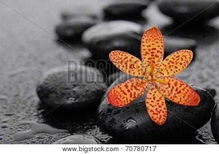 Macro of orange flower and therapy stones