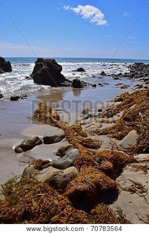 Washed up Kelp