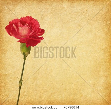 old paper background with pink flowers.  Eustoma