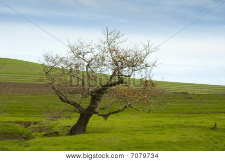 Barren Tree In Grass Meadow