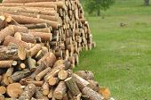 pic of firewood  - Firewood preparations for the winter - JPG