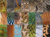 pic of lizard skin  - The skin of reptiles is made out of scales - JPG