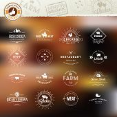 image of meat icon  - Set of vintage style elements for labels and badges for meat - JPG