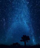 stock photo of baobab  - Starry sky and baobab trees - JPG