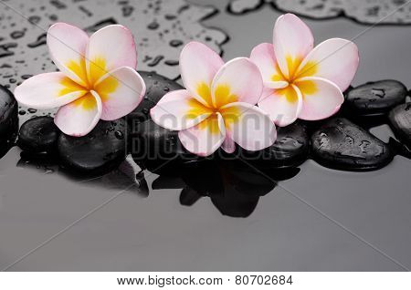 pink frangipani,with therapy stones