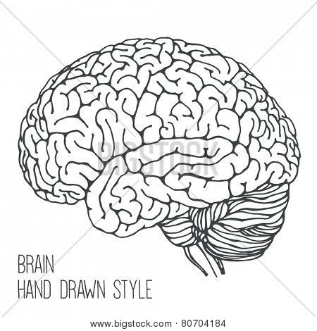 Brain - hand drawn style