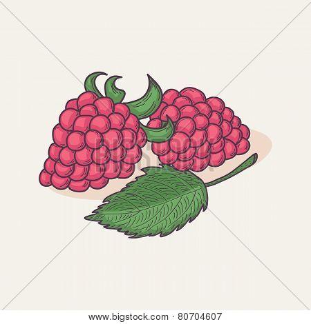 Doodle Raspberry Isolated