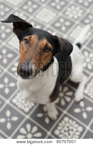 Dog at home, cute dog on carpet