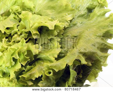 Green Salad Fresh Washed
