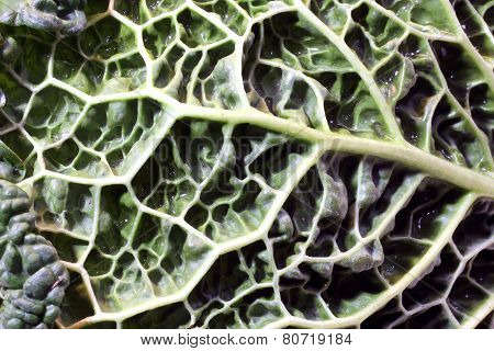 Close Up Leaf Of Green Cabbage
