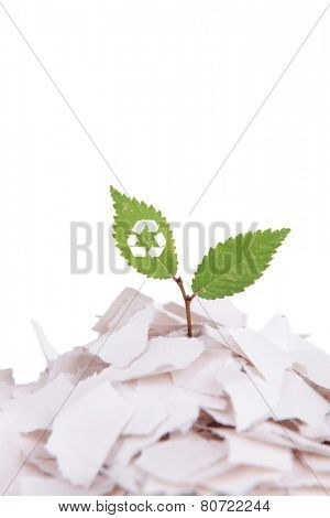 Plant with recycle symbol growing from paper isolated on white