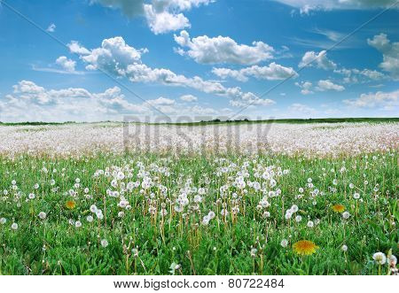 Field With Dandelions. Background.
