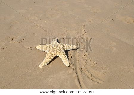 Large Star Fish on Sandy Beach