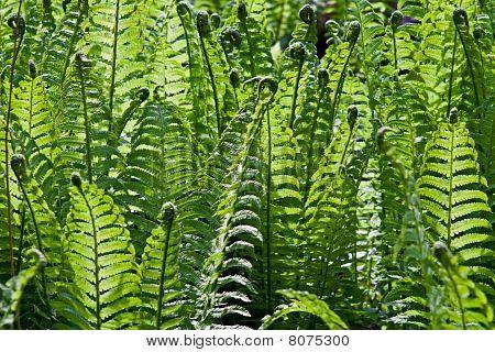 Fresh Green Fern Frond