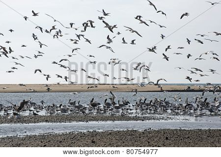 Seabirds On A Pacific Ocean Tidal Flat