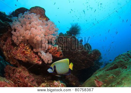 Beautiful coral reef with tropical fish underwater in ocean