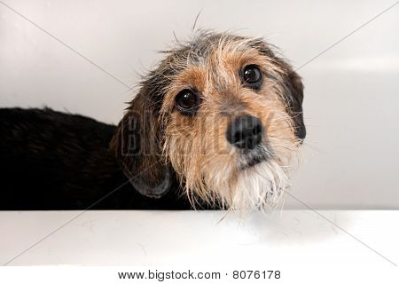 Dog In The Bath Tub