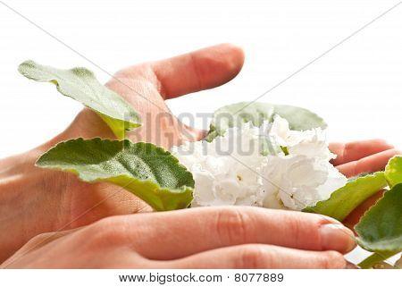 Flores en las manos