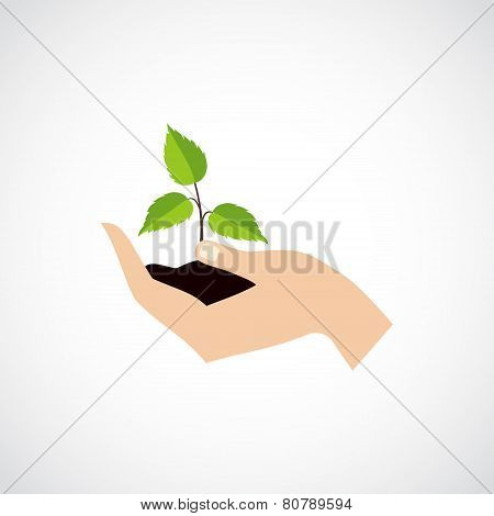 Hand Hold Protect Plant