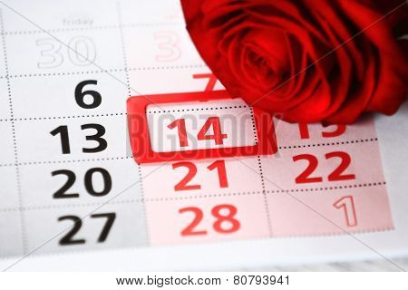 red rose lays on the calendar with the date of February 14 Valentine's day