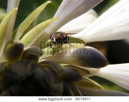 Small fly on flower