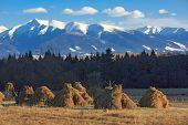 stock photo of haystacks  - haystack - JPG