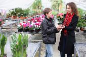pic of begonias  - Boy gives mother a flower pot with blooming begonia in the greenhouse - JPG