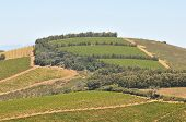 pic of south-western  - View of vineyards near Sir Lowreys Pass in the Western Cape Province of South Africa - JPG