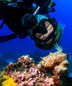 pic of biodiversity  - SCUBA diver examines a colorful Nudibranch on a tropical coral reef