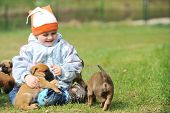 pic of belgian shepherd  - little boy playing with puppies belgian shepherd malinois - JPG
