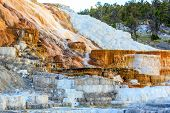 picture of mammoth  - Travertine Terraces in Mammoth Hot Springs in Yellowstone National Park - JPG