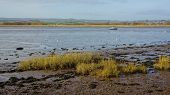 foto of tide  - View from Goat Walk of River Exe estuary at Topsham at low tide - JPG