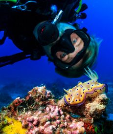 picture of biodiversity  - SCUBA diver examines a colorful Nudibranch on a tropical coral reef  - JPG