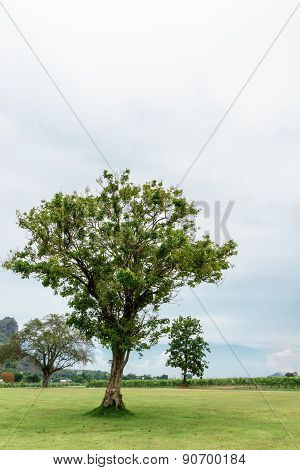 Tree On Green Grass With White Sky In Nature View