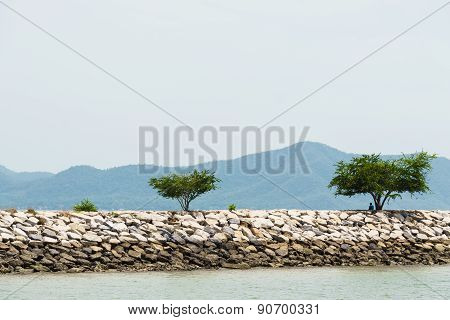 Tree On Breakwater Formed By Concrete Blocks