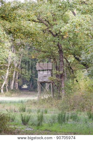 Watchtower In Forest