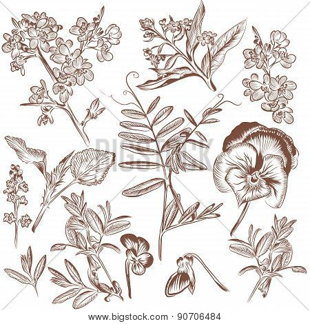 Collection Of Vector Hand Drawn Plants Leafs And Flowers