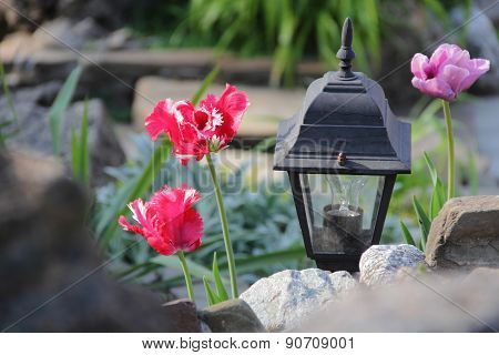 Decorative Street Lantern And Bright Tulips