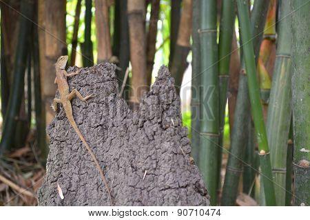 Lizard in bamboo garden
