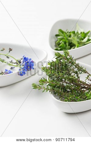 Assorted Herbs With Focus To Fresh Rosemary
