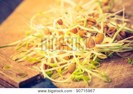 Vintage Photo Of Fresh Lentil And Wheat Sprouts