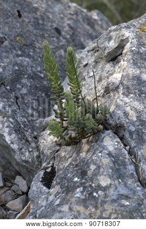 life among the rock...