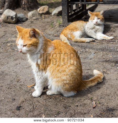 Two Ginger Striped Cats Resting On A Sidewalk