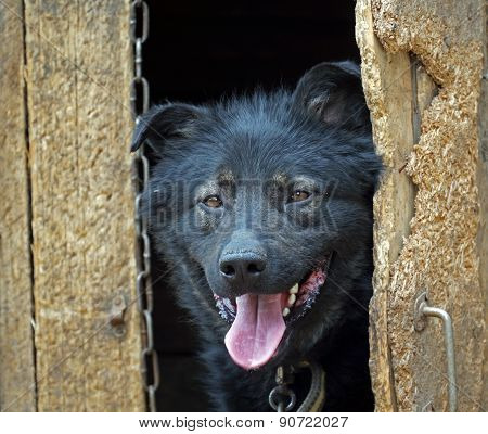 dog looks out of the kennel