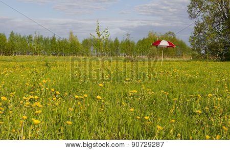 Umbrella In Meadow