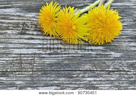 Yellow Dandelion Flowers On A Wooden Background