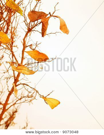 Autumnal Tree Branch